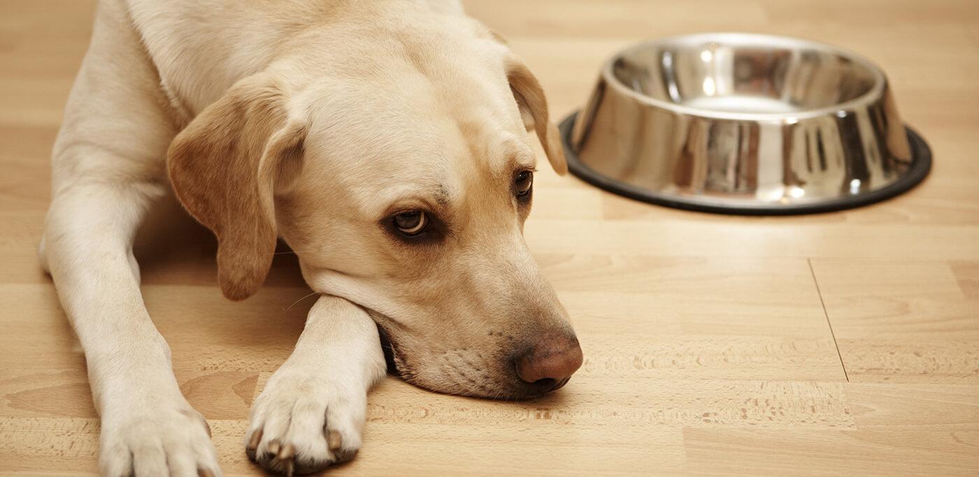 Dog next to empty food bowl